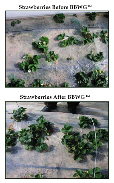 Strawberries-Before-and-After_Small